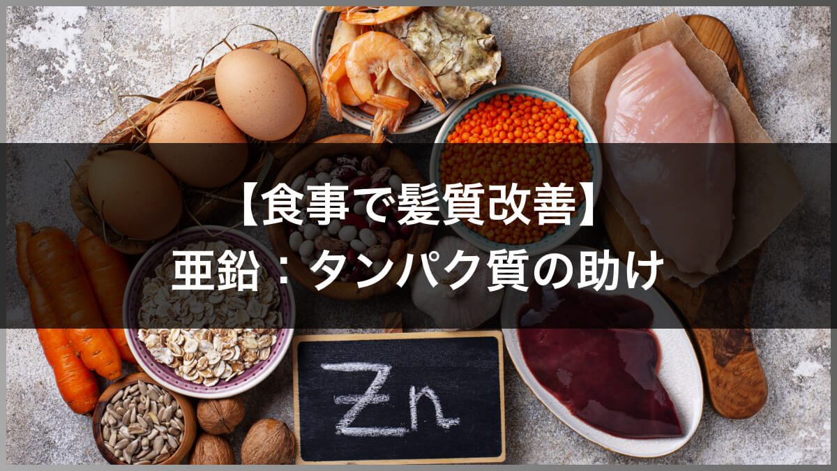 亜鉛:タンパク質の助け